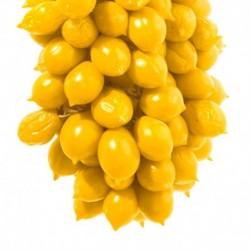 Conserva di pomodoro giallo da serbo
